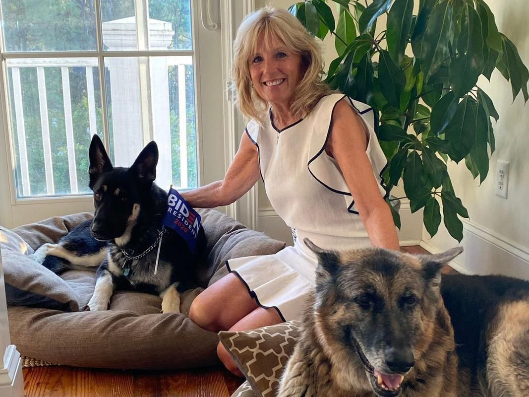 2 This is Major and Champ They are the dogs of Joe Biden and Dr Biden Champ has already been tos