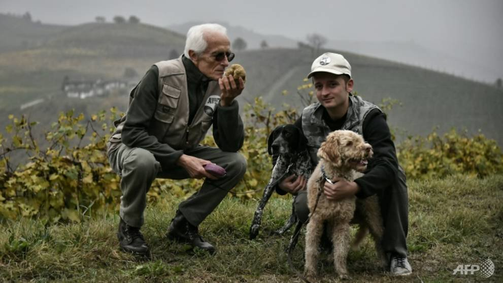 the white truffles of the alba region are highly sought after and are unearthed between september 21 and january 31 1541962344905 3
