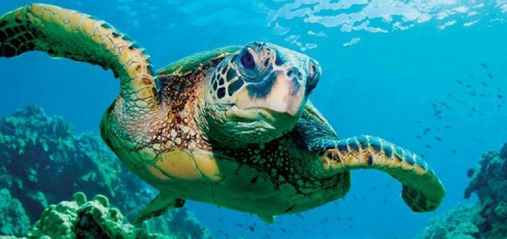 Απίστευτο: Θαλάσσιες χελώνες έκαναν επίθεση σε λουόμενους στη Μάνη